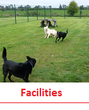 Click for more on Kennel Facilities