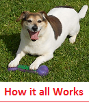 "Click for more on ""How our Kennel Works"""