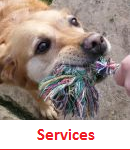 Click for more on Special Services at kennels